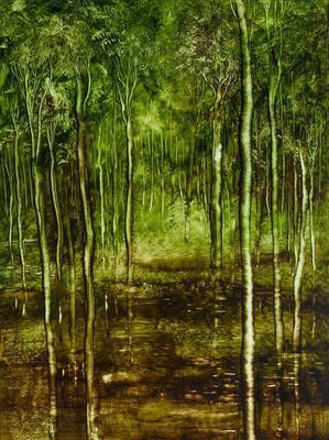 Rainforest, Eungella
